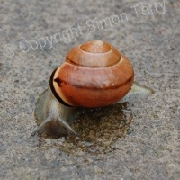 Snail Dark