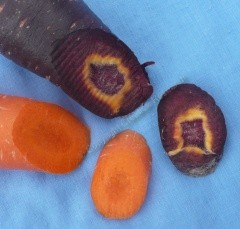 carrots orange purple
