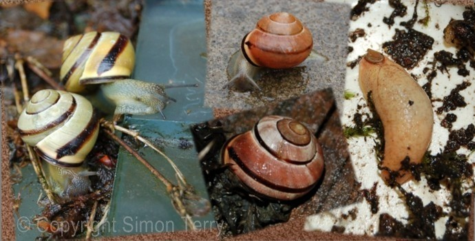 Snail_Montage_wm.jpg