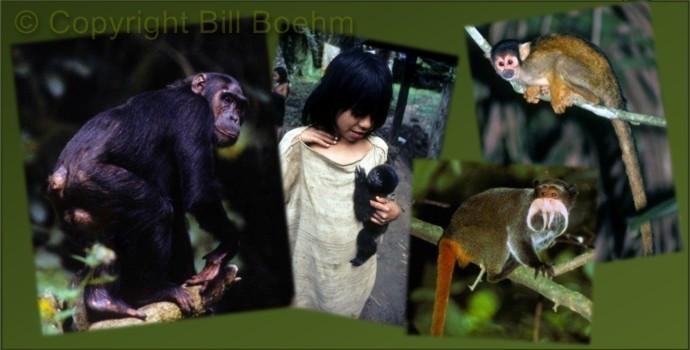ape-human-monkey.jpg