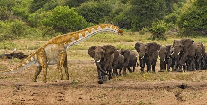 Large Animals