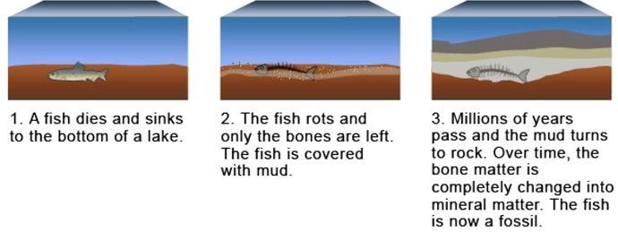 Fossil Fish Story