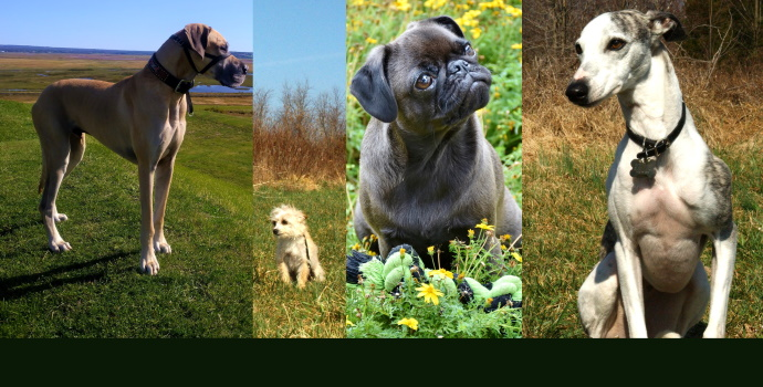 Dog Variation